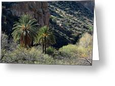 Desert Palms Greeting Card