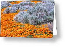 Desert Poppies And Sage Greeting Card