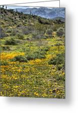 Desert Poppies Greeting Card