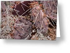 Desert Prickly Pear Cactus Greeting Card