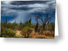 Desert Rains  Greeting Card