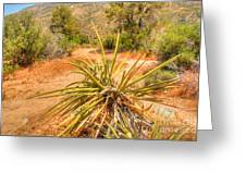 Desert Reds And Greens Greeting Card