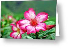Desert Rose At Kualoa Greeting Card