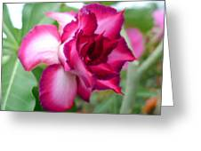 Desert Rose Greeting Card