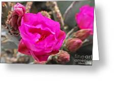 Desert Rose Greeting Card by Rebecca Christine Cardenas