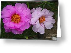 Desert Roses In Purple And Pink Greeting Card