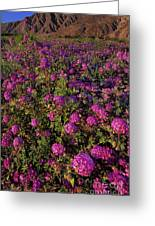 Desert Sand Verbena Wildflowers Greeting Card