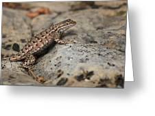 Desert Spiny Lizard Greeting Card