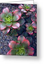 Desert Succulents Greeting Card