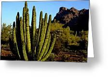 Desert Sun Greeting Card by Cole Black