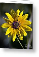 Desert Sunflower Greeting Card