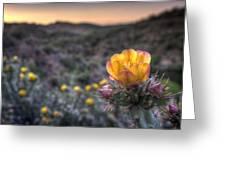 Desert Sunset Blossom Greeting Card