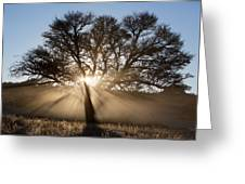 Desert Tree Greeting Card