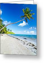 Deserted Beach And Palm Trees Greeting Card