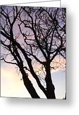 Deserted Tree Greeting Card