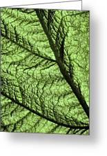 Design In Nature Greeting Card