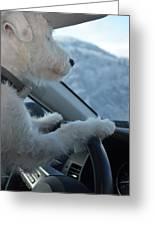 Designated Driver Greeting Card