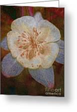 Designer Floral Greeting Card