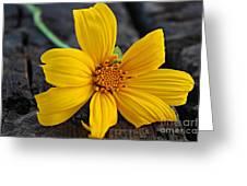 Detail Greeting Card