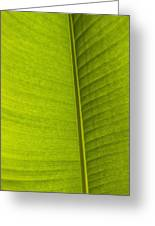 Detail Of Banana Leaf Andromeda Greeting Card