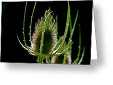 Detail Of Thistle Greeting Card