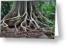 Detail Tree Roots Rain Forest Greeting Card