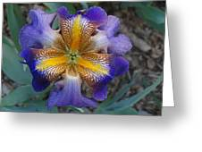 Detailed Iris Greeting Card