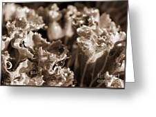 Details In The Dew Sepia Greeting Card