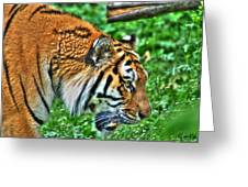 Determination In The Tigers Stare Greeting Card