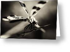 Determined Dragonfly Greeting Card