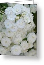 Deutzia Pure And Simple Greeting Card