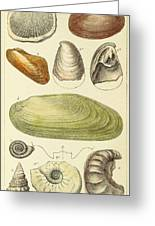 Devonian Fossils, Illustration Greeting Card