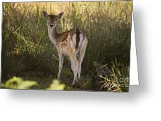 Devonshire Bambi  Greeting Card