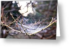 Dew Covered Spiderweb Greeting Card by Julie Cameron