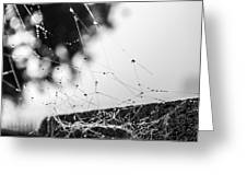Dew Covered Web Greeting Card