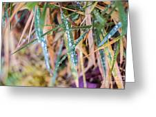 Dew Drop Color Greeting Card