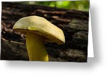 Dew Drop On Poriaceae Greeting Card