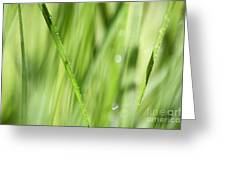 Dew Drops In Long Sunlit Grass Greeting Card by Natalie Kinnear