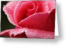 Dew Drops On Pink Greeting Card