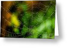 Dew Drops On Spider Web  Greeting Card