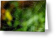 Dew Drops On Spider Web 3 Greeting Card