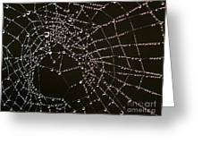 Dew Drops On Spider Web 4 Greeting Card