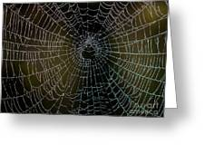 Dew Drops On Spider Web 5 Greeting Card