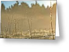 Dew Fog And Grasses Greeting Card