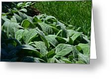 Dew Kissed Foliage Greeting Card