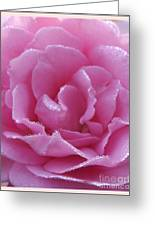 Dew Kissed Rose Greeting Card