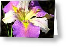 Dew On An Iris Greeting Card