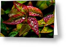 Dew On Autumn Leaves Greeting Card