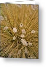 Dew On Ornamental Grass No. 3 Greeting Card