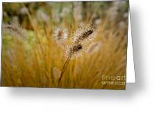 Dew On Ornamental Grass No. 4 Greeting Card